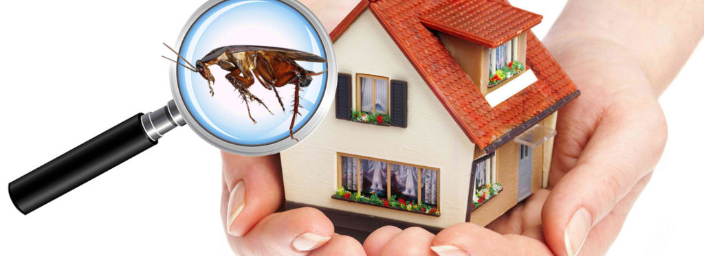 Residential-Pest-Control-Service.jpg