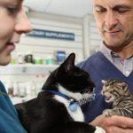 pet-insurance-min.jpg